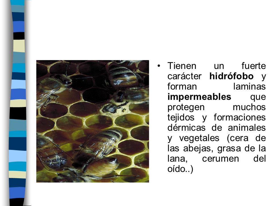 Tienen un fuerte carácter hidrófobo y forman laminas impermeables que protegen muchos tejidos y formaciones dérmicas de animales y vegetales (cera de