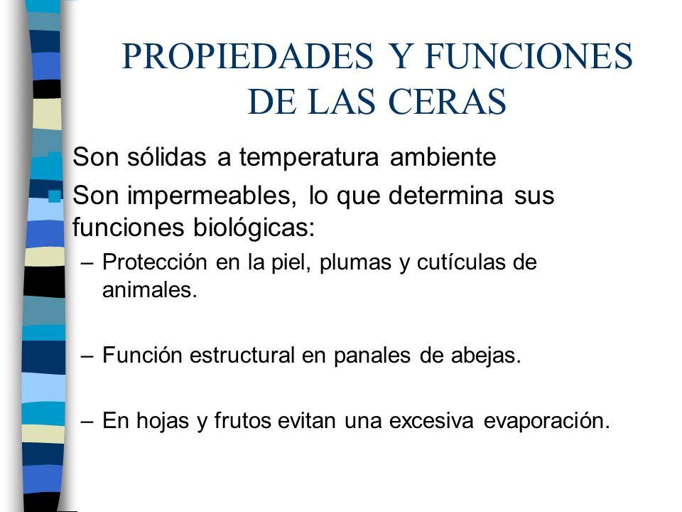 PROPIEDADES Y FUNCIONES DE LAS CERAS Son sólidas a temperatura ambiente Son impermeables, lo que determina sus funciones biológicas: –Protección en la