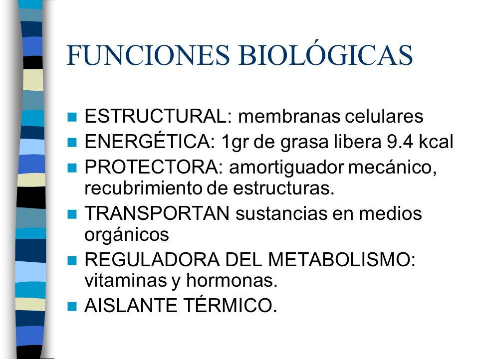 FUNCIONES BIOLÓGICAS ESTRUCTURAL: membranas celulares ENERGÉTICA: 1gr de grasa libera 9.4 kcal PROTECTORA: amortiguador mecánico, recubrimiento de est