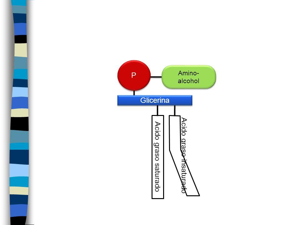 Amino- alcohol Acido graso insaturado Acido graso saturado Glicerina P P
