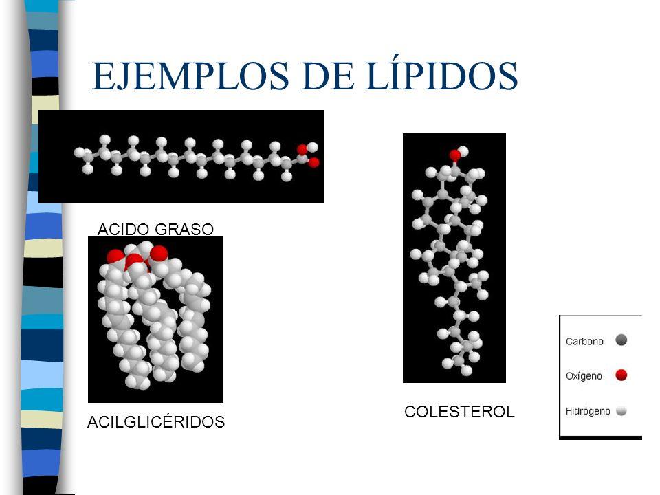 Triacilglicéridos o grasas Resultan de la esterificación de una molécula de glicerol o glicerina (propanotriol) con 3 moléculas de ácidos grasos.