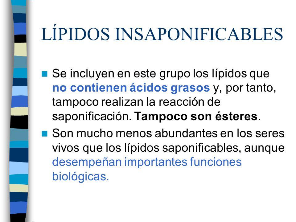 LÍPIDOS INSAPONIFICABLES Se incluyen en este grupo los lípidos que no contienen ácidos grasos y, por tanto, tampoco realizan la reacción de saponifica