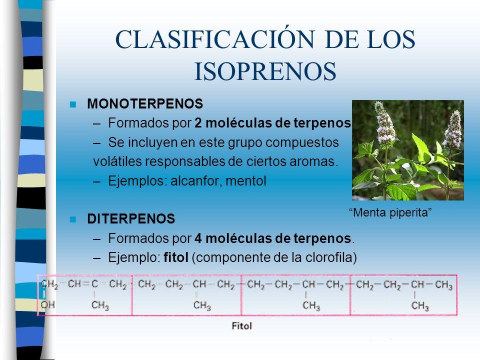 CLASIFICACIÓN DE LOS ISOPRENOS MONOTERPENOS –Formados por 2 moléculas de terpenos. –Se incluyen en este grupo compuestos volátiles responsables de cie