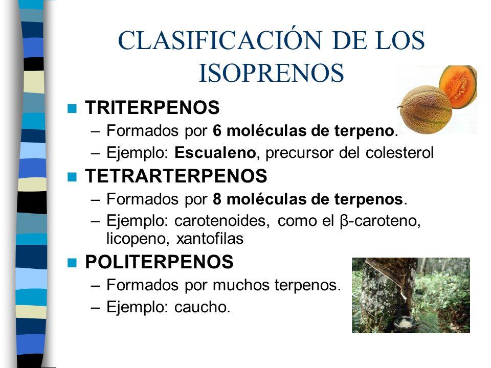 CLASIFICACIÓN DE LOS ISOPRENOS TRITERPENOS –Formados por 6 moléculas de terpeno. –Ejemplo: Escualeno, precursor del colesterol TETRARTERPENOS –Formado