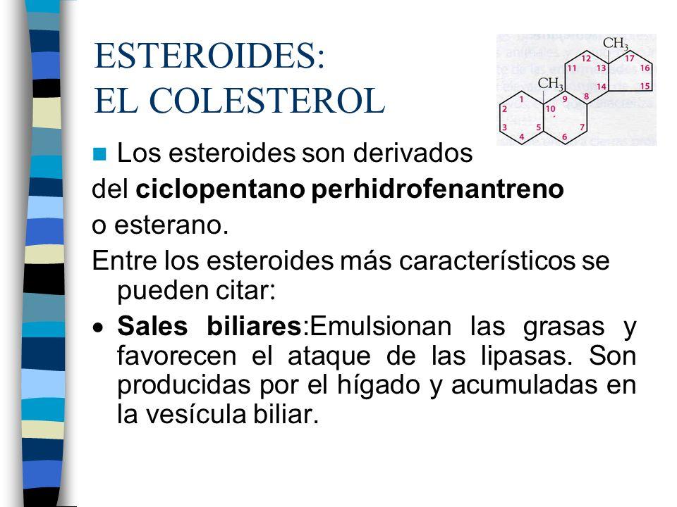 ESTEROIDES: EL COLESTEROL Los esteroides son derivados del ciclopentano perhidrofenantreno o esterano. Entre los esteroides más característicos se pue
