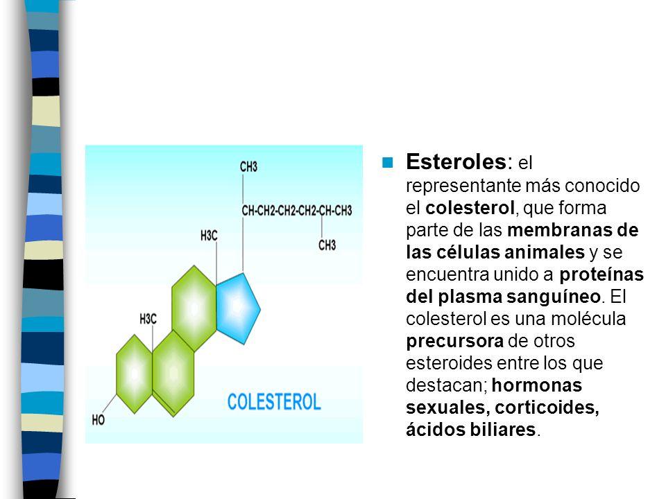 Esteroles: el representante más conocido el colesterol, que forma parte de las membranas de las células animales y se encuentra unido a proteínas del