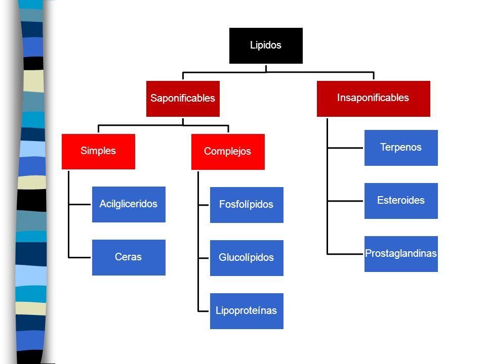 Lipidos Saponificables Simples Acilgliceridos Ceras Complejos Fosfolípidos Glucolípidos Lipoproteínas Insaponificables Terpenos Esteroides Prostagland