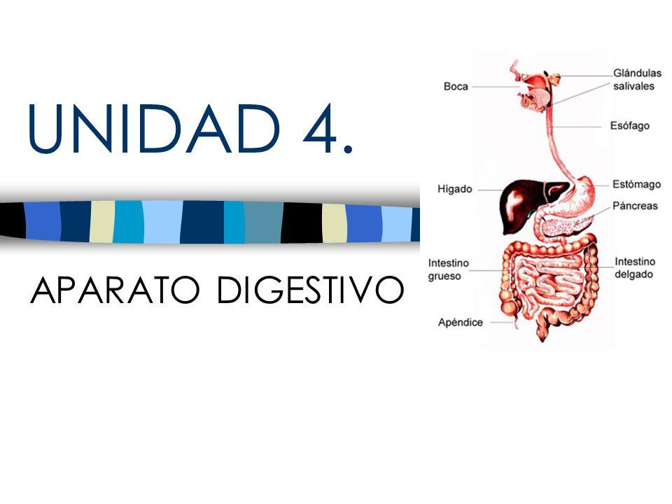 UNIDAD 4. APARATO DIGESTIVO