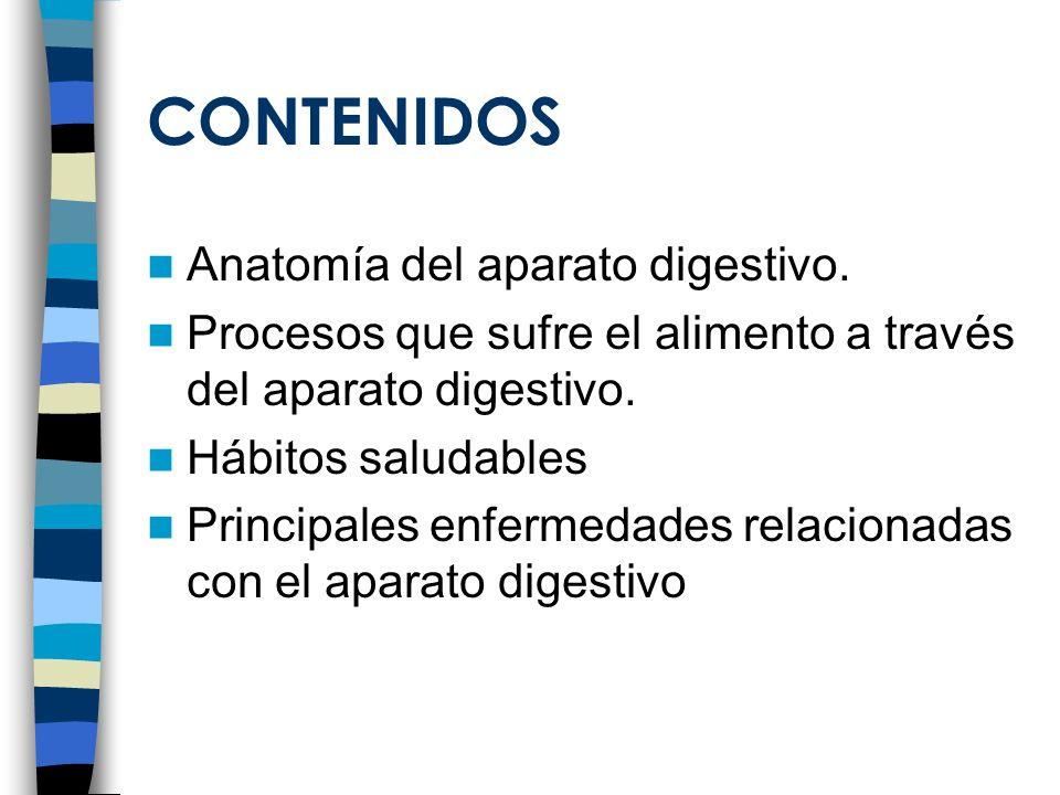 CONTENIDOS Anatomía del aparato digestivo. Procesos que sufre el alimento a través del aparato digestivo. Hábitos saludables Principales enfermedades