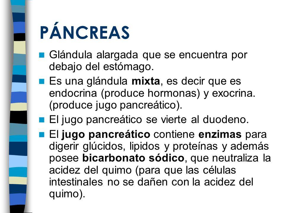 PÁNCREAS Glándula alargada que se encuentra por debajo del estómago. Es una glándula mixta, es decir que es endocrina (produce hormonas) y exocrina. (