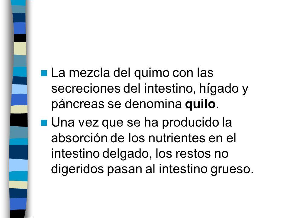 La mezcla del quimo con las secreciones del intestino, hígado y páncreas se denomina quilo. Una vez que se ha producido la absorción de los nutrientes