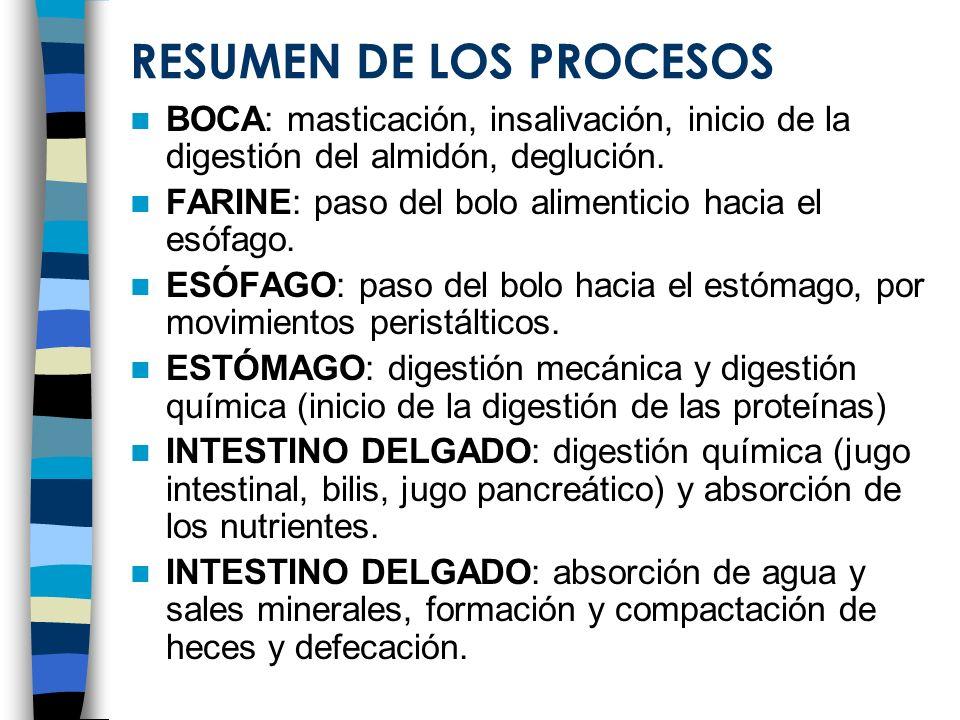 RESUMEN DE LOS PROCESOS BOCA: masticación, insalivación, inicio de la digestión del almidón, deglución. FARINE: paso del bolo alimenticio hacia el esó