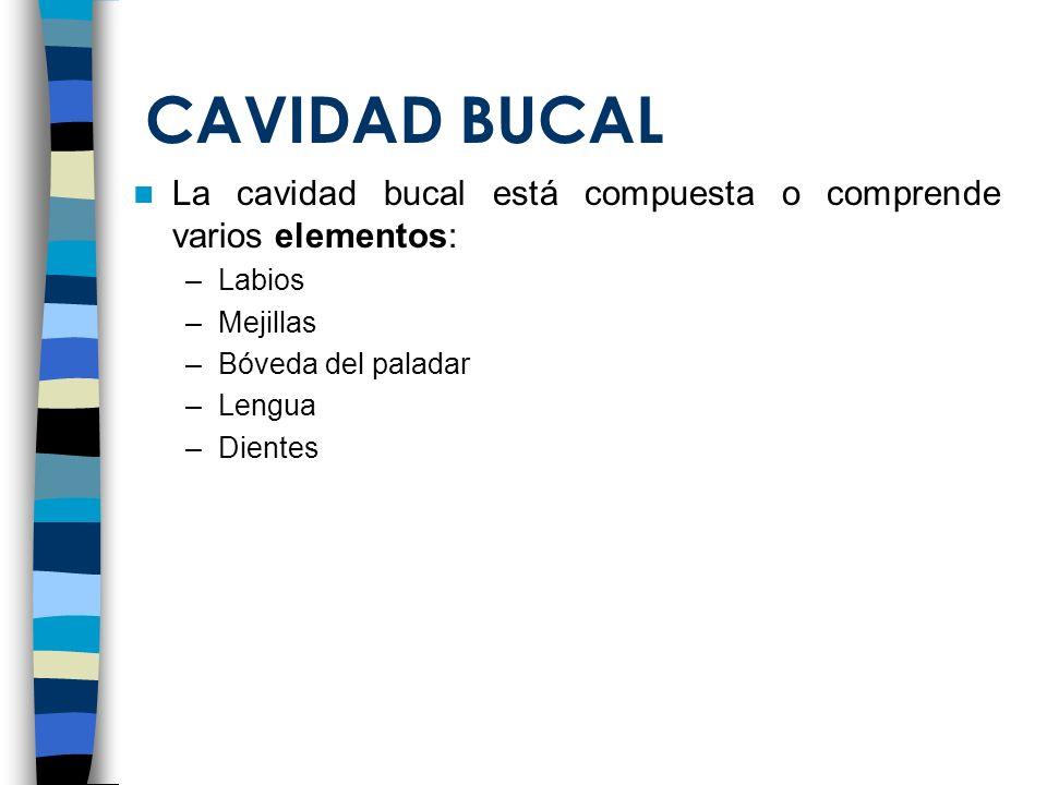 CAVIDAD BUCAL La cavidad bucal está compuesta o comprende varios elementos: –Labios –Mejillas –Bóveda del paladar –Lengua –Dientes