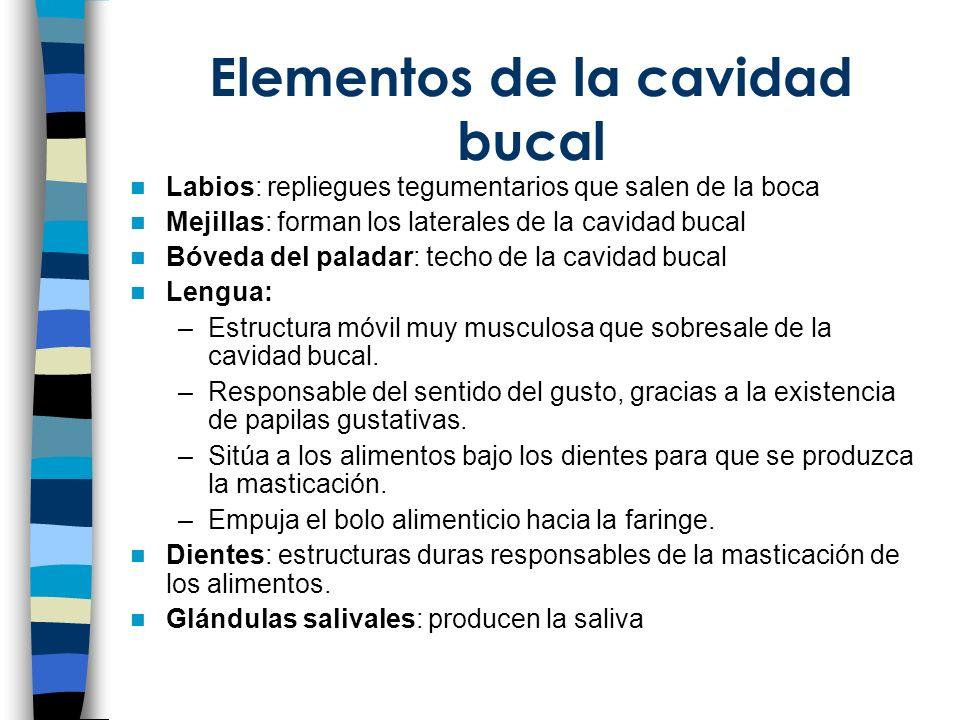 Elementos de la cavidad bucal Labios: repliegues tegumentarios que salen de la boca Mejillas: forman los laterales de la cavidad bucal Bóveda del pala