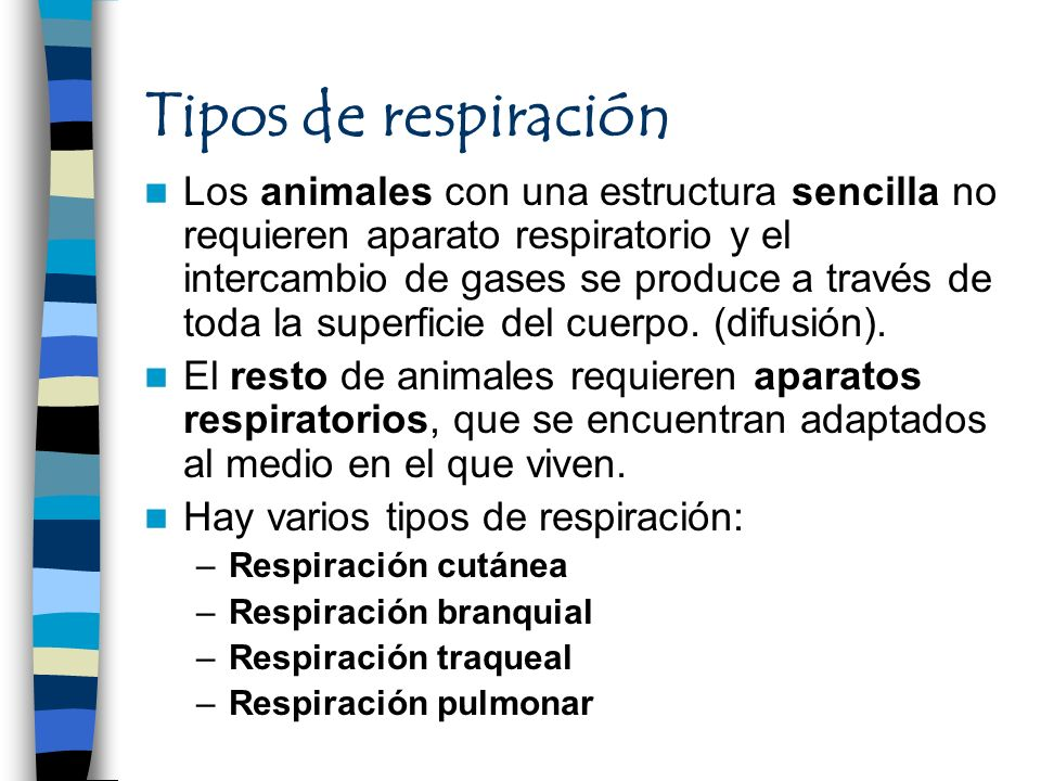 Tipos de respiración Los animales con una estructura sencilla no requieren aparato respiratorio y el intercambio de gases se produce a través de toda