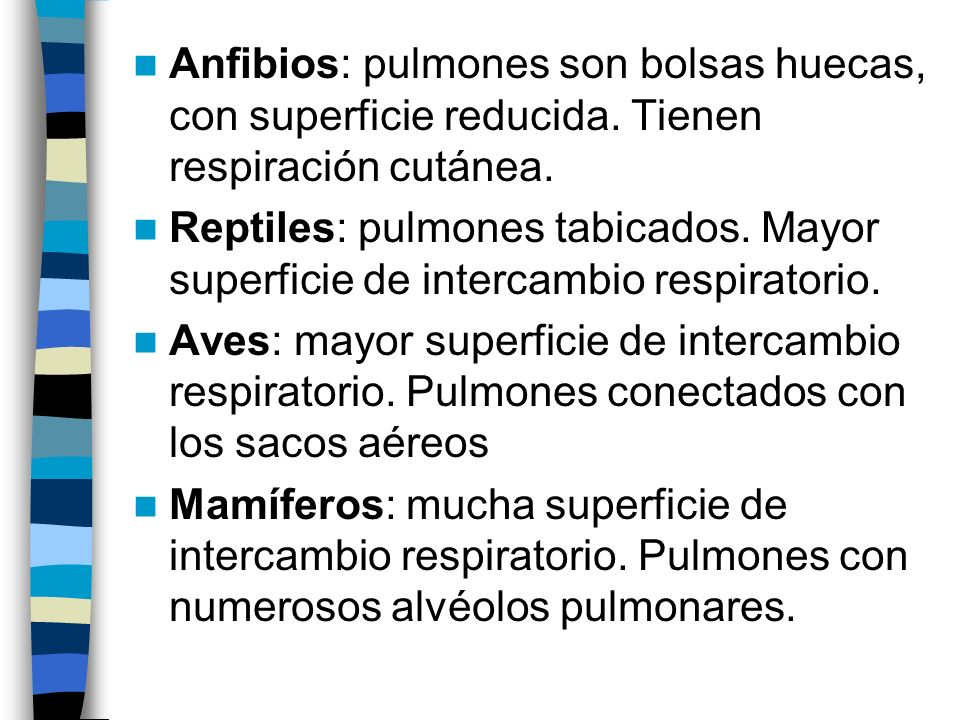 Anfibios: pulmones son bolsas huecas, con superficie reducida. Tienen respiración cutánea. Reptiles: pulmones tabicados. Mayor superficie de intercamb