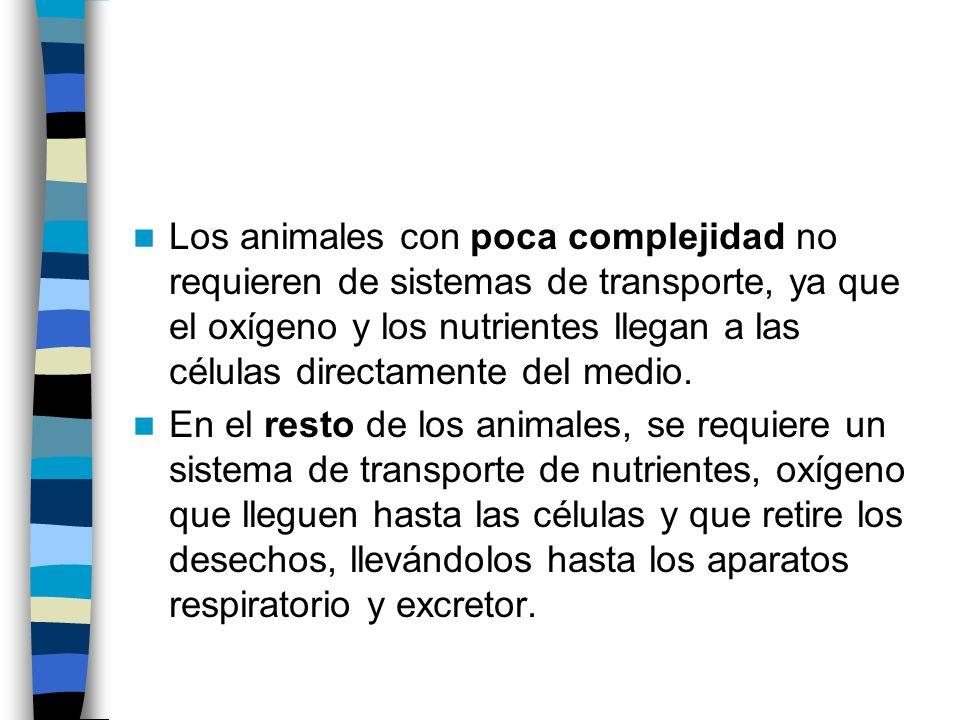 Los animales con poca complejidad no requieren de sistemas de transporte, ya que el oxígeno y los nutrientes llegan a las células directamente del med