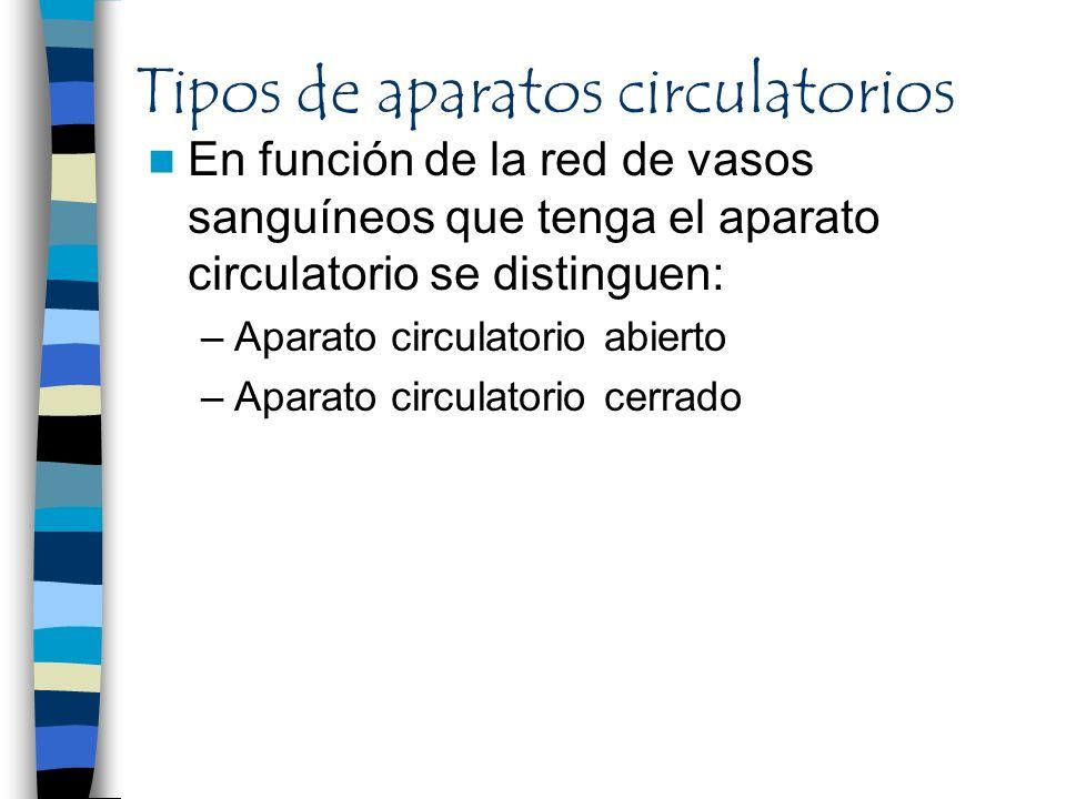 Tipos de aparatos circulatorios En función de la red de vasos sanguíneos que tenga el aparato circulatorio se distinguen: –Aparato circulatorio abiert
