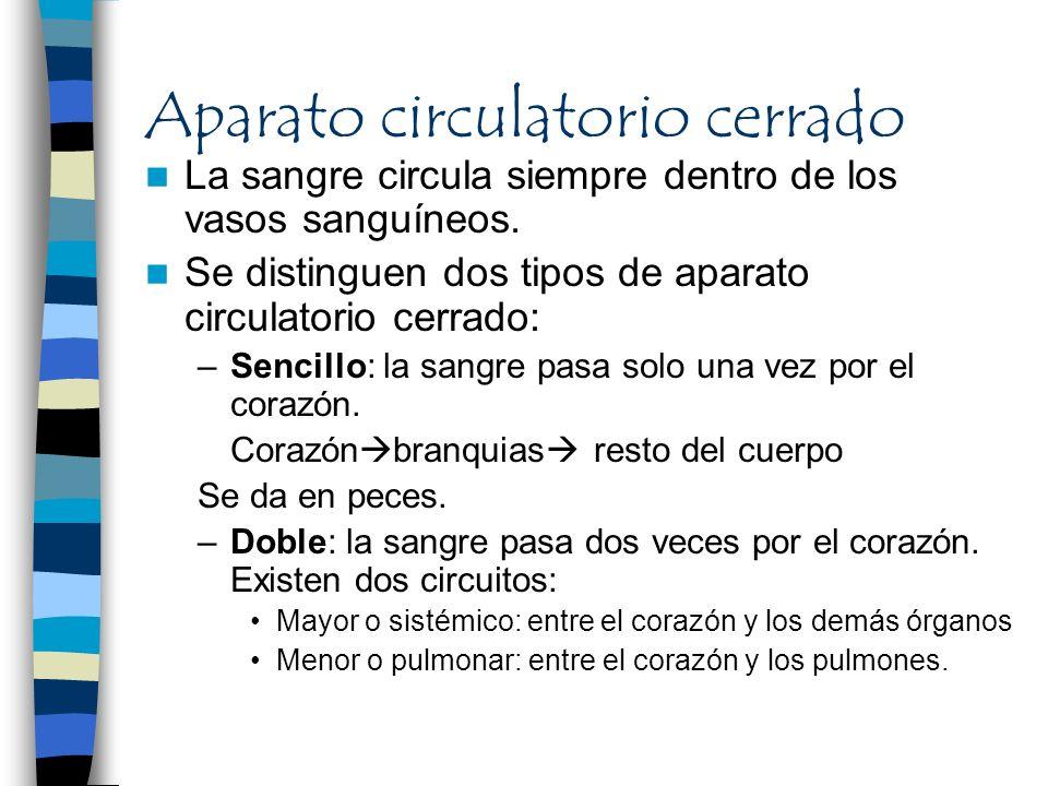 Aparato circulatorio cerrado La sangre circula siempre dentro de los vasos sanguíneos. Se distinguen dos tipos de aparato circulatorio cerrado: –Senci