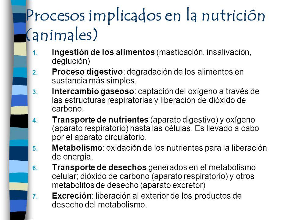 Procesos implicados en la nutrición (animales) 1. Ingestión de los alimentos (masticación, insalivación, deglución) 2. Proceso digestivo: degradación