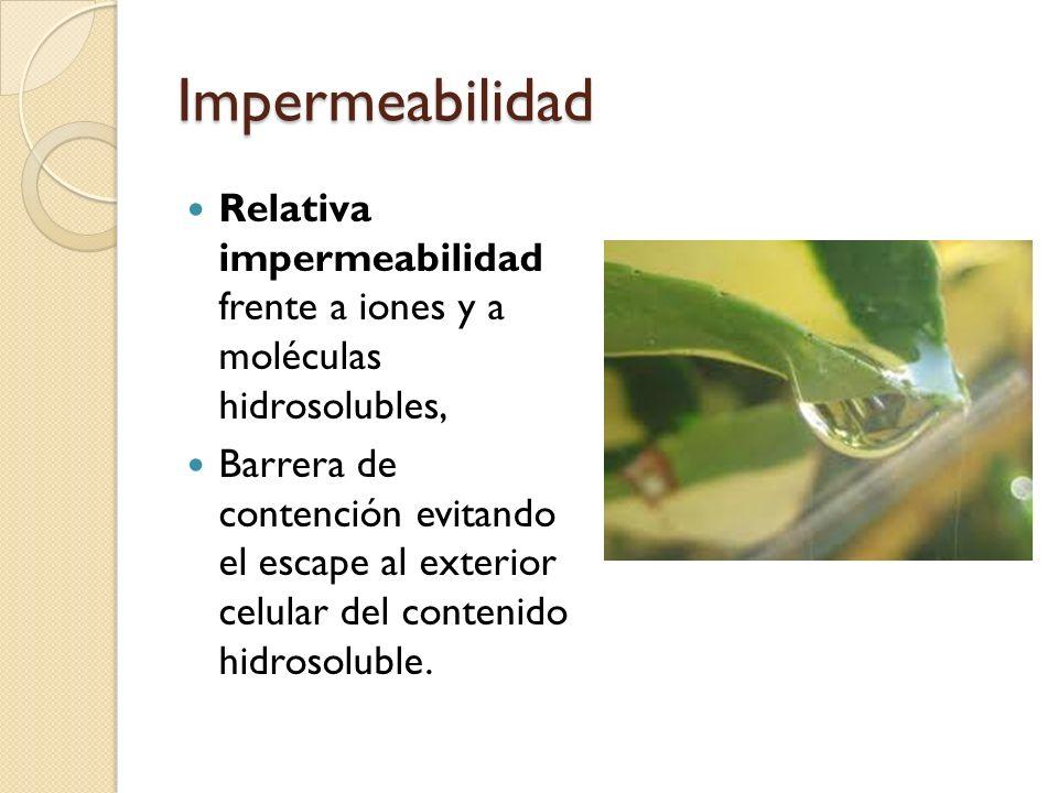 Impermeabilidad Relativa impermeabilidad frente a iones y a moléculas hidrosolubles, Barrera de contención evitando el escape al exterior celular del contenido hidrosoluble.