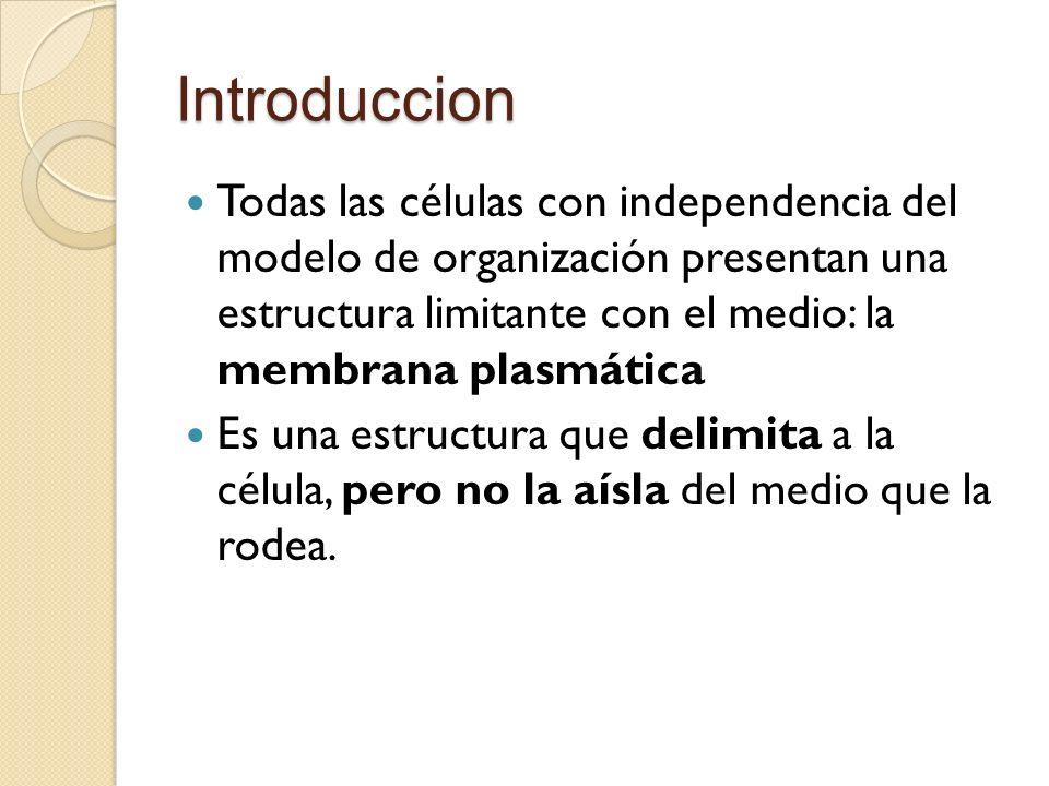 Introduccion Todas las células con independencia del modelo de organización presentan una estructura limitante con el medio: la membrana plasmática Es una estructura que delimita a la célula, pero no la aísla del medio que la rodea.