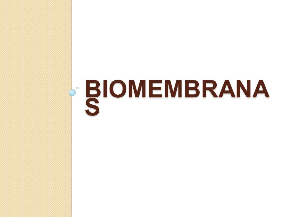 BIOMEMBRANA S
