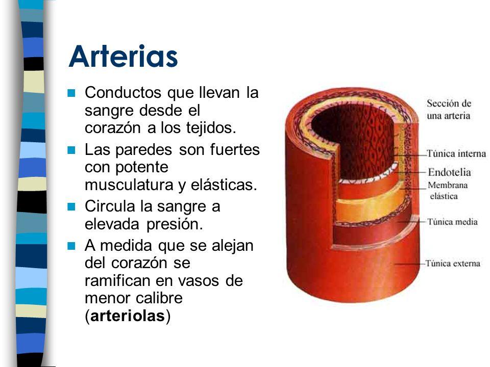 Arterias Conductos que llevan la sangre desde el corazón a los tejidos.
