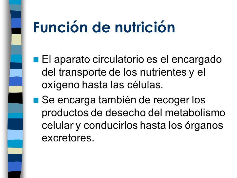 El aparato circulatorio está constituido por dos sistemas: –Sistema circulatorio –Sistema linfático