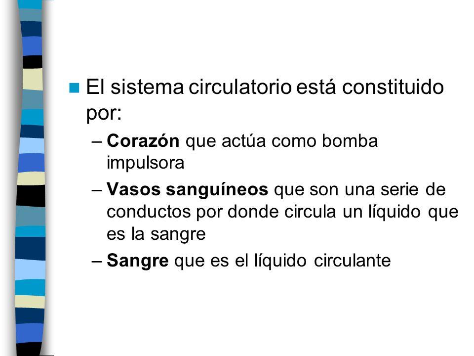 El sistema circulatorio es: –Cerrado: la sangre circula por los vasos sanguíneos.