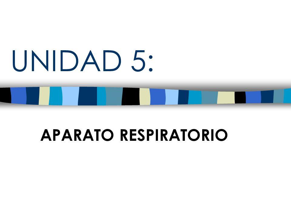 UNIDAD 5: APARATO RESPIRATORIO