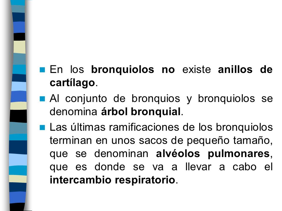 En los bronquiolos no existe anillos de cartílago. Al conjunto de bronquios y bronquiolos se denomina árbol bronquial. Las últimas ramificaciones de l