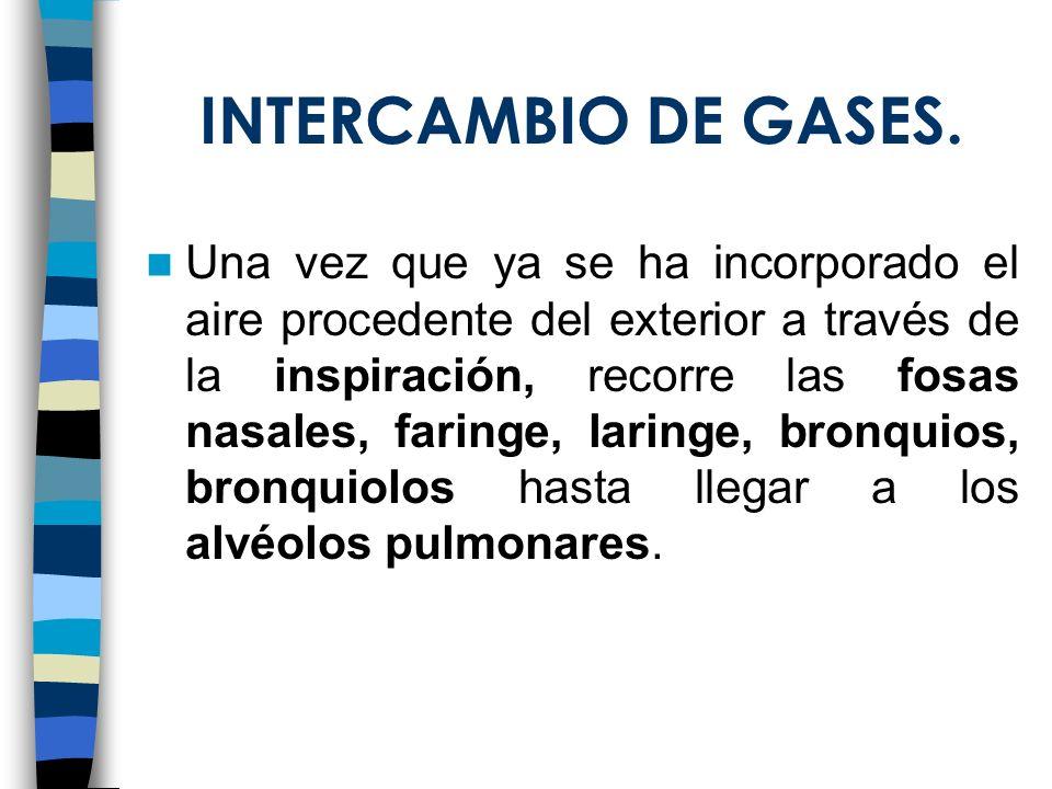 INTERCAMBIO DE GASES. Una vez que ya se ha incorporado el aire procedente del exterior a través de la inspiración, recorre las fosas nasales, faringe,