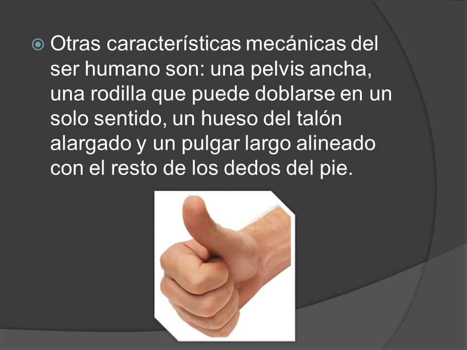 El ser humano posee unas manos muy sensibles, capaces de manipular los objetos de forma muy precisa gracias al pulgar humano, que es alargado, puede r