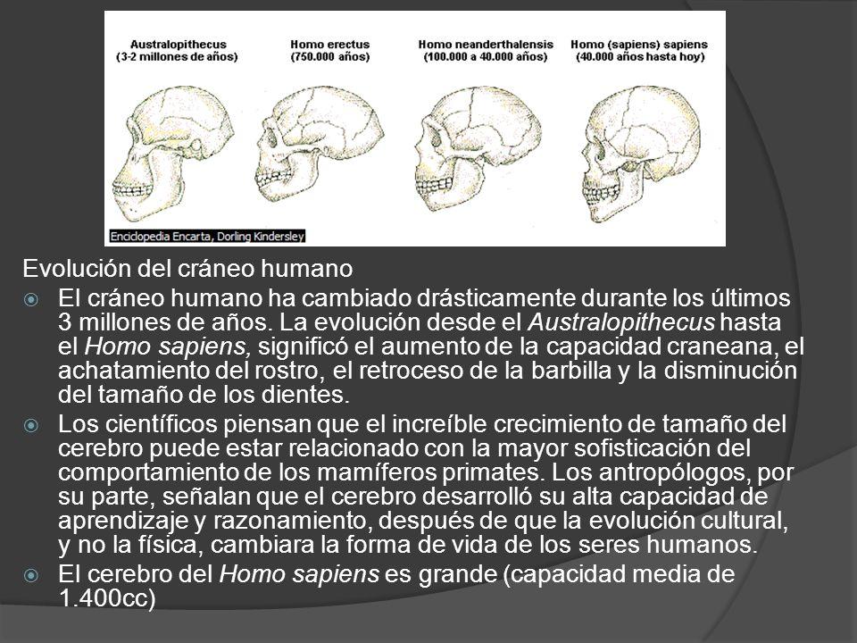 Evolución del cráneo humano El cráneo humano ha cambiado drásticamente durante los últimos 3 millones de años.