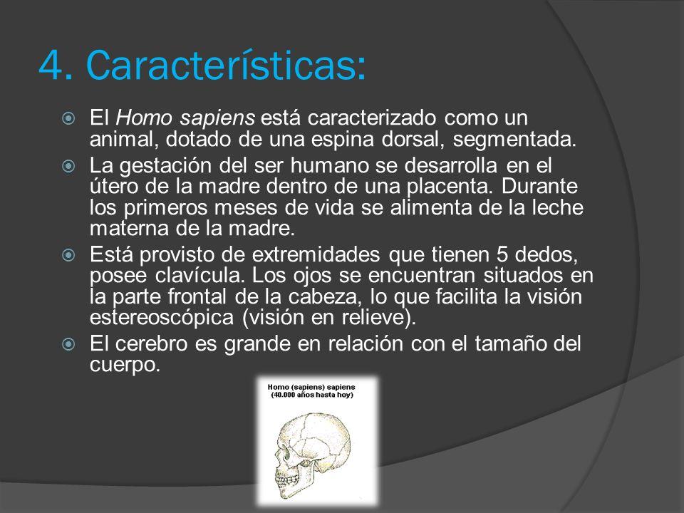 2.Aparece el Homo sapiens El Homo sapiens surge hace 300.000 o 200.000 años en África y Asia. Esta nueva variedad de individuos revela rasgos físicos