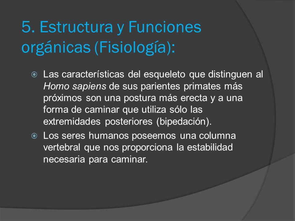 4. Características: El Homo sapiens está caracterizado como un animal, dotado de una espina dorsal, segmentada. La gestación del ser humano se desarro