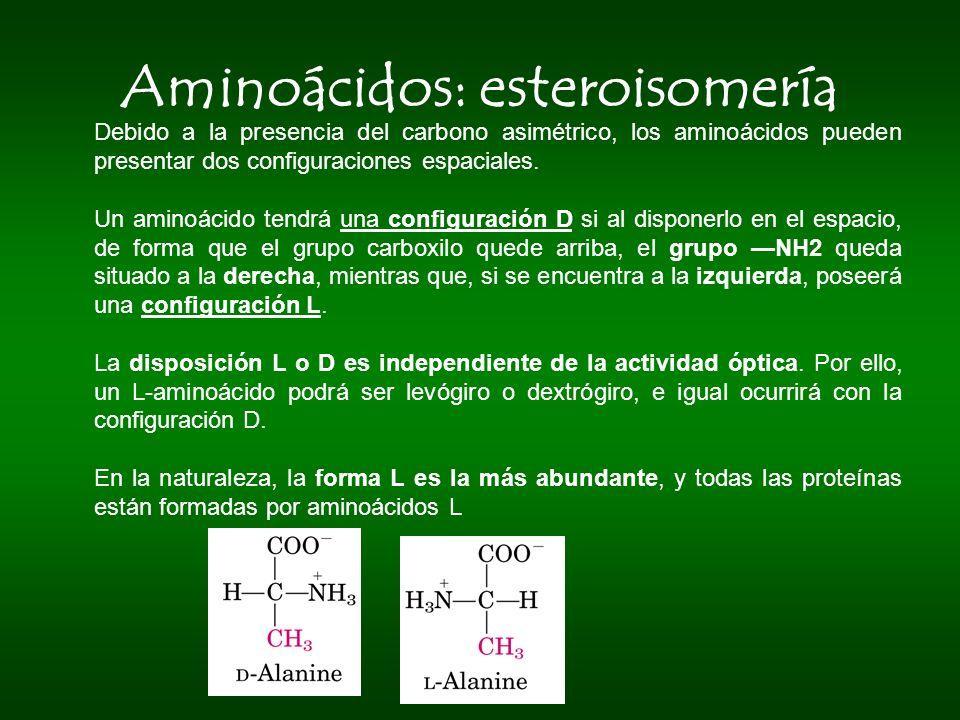 Aminoácidos: esteroisomería Debido a la presencia del carbono asimétrico, los aminoácidos pueden presentar dos configuraciones espaciales. Un aminoáci