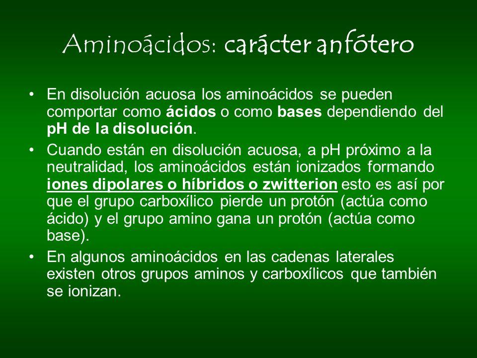 Aminoácidos: carácter anfótero En disolución acuosa los aminoácidos se pueden comportar como ácidos o como bases dependiendo del pH de la disolución.