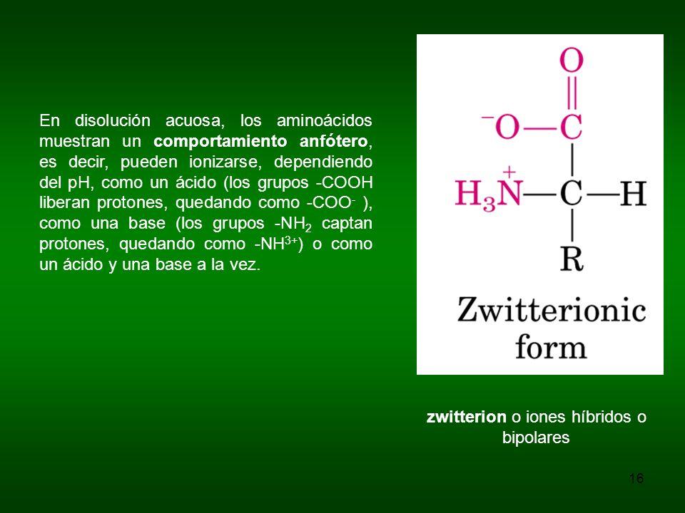 En disolución acuosa, los aminoácidos muestran un comportamiento anfótero, es decir, pueden ionizarse, dependiendo del pH, como un ácido (los grupos -