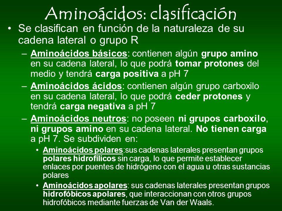 Aminoácidos: clasificación Se clasifican en función de la naturaleza de su cadena lateral o grupo R –Aminoácidos básicos: contienen algún grupo amino