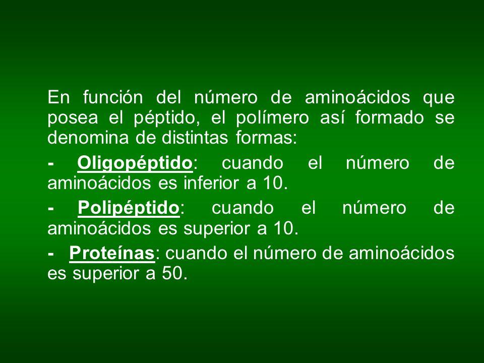 En función del número de aminoácidos que posea el péptido, el polímero así formado se denomina de distintas formas: - Oligopéptido: cuando el número d