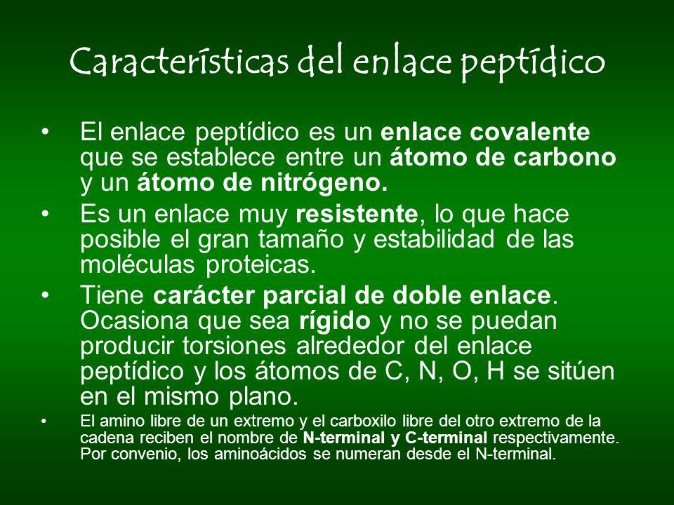 Características del enlace peptídico El enlace peptídico es un enlace covalente que se establece entre un átomo de carbono y un átomo de nitrógeno. Es
