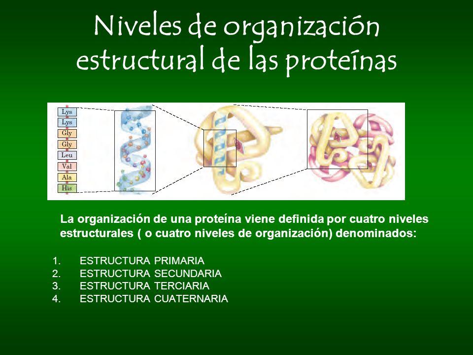 Niveles de organización estructural de las proteínas La organización de una proteína viene definida por cuatro niveles estructurales ( o cuatro nivele