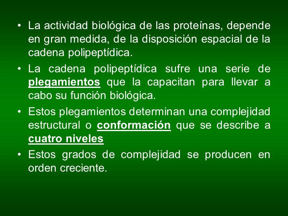 La actividad biológica de las proteínas, depende en gran medida, de la disposición espacial de la cadena polipeptídica. La cadena polipeptídica sufre