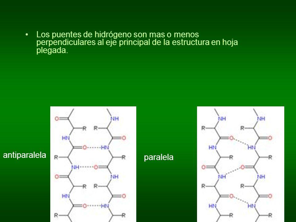 Los puentes de hidrógeno son mas o menos perpendiculares al eje principal de la estructura en hoja plegada. antiparalela paralela
