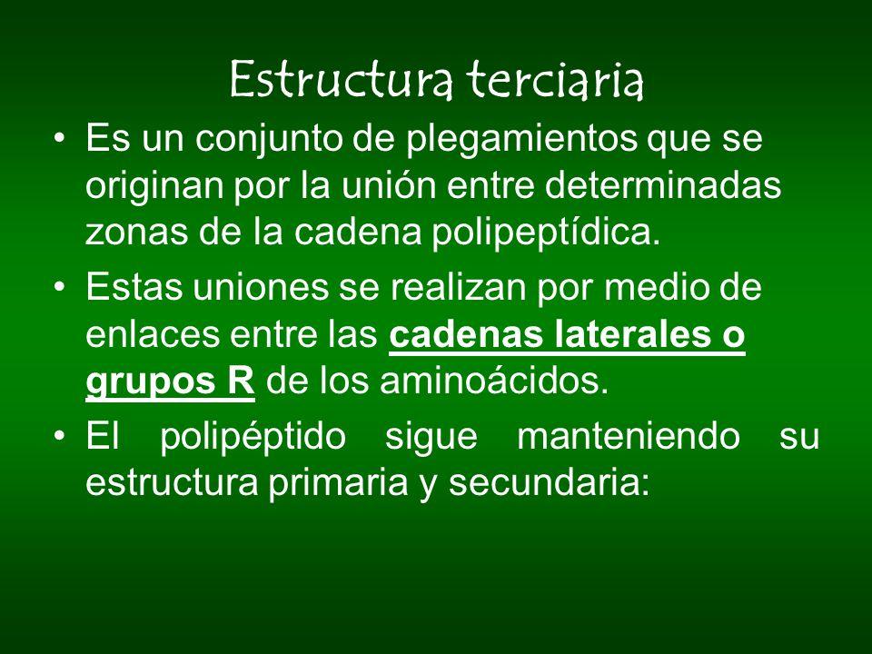 Estructura terciaria Es un conjunto de plegamientos que se originan por la unión entre determinadas zonas de la cadena polipeptídica. Estas uniones se