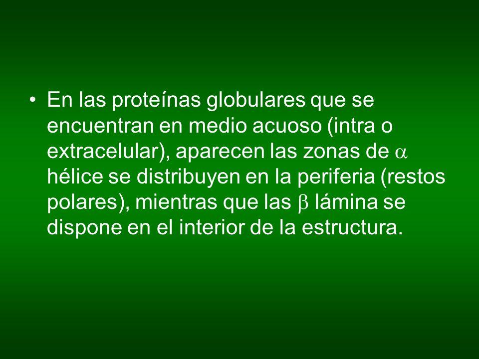 En las proteínas globulares que se encuentran en medio acuoso (intra o extracelular), aparecen las zonas de hélice se distribuyen en la periferia (res
