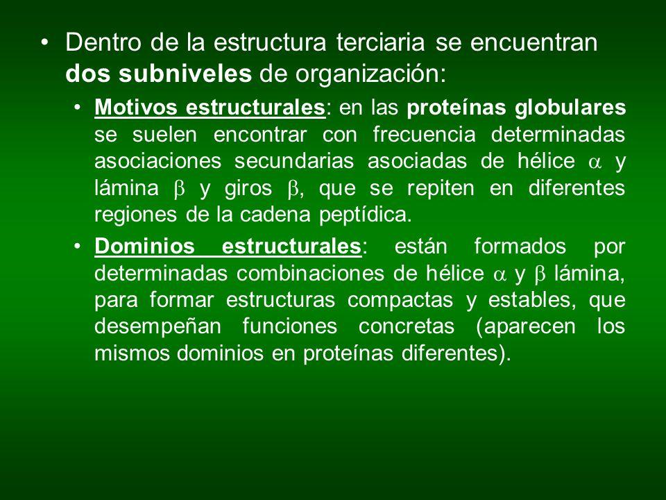 Dentro de la estructura terciaria se encuentran dos subniveles de organización: Motivos estructurales: en las proteínas globulares se suelen encontrar