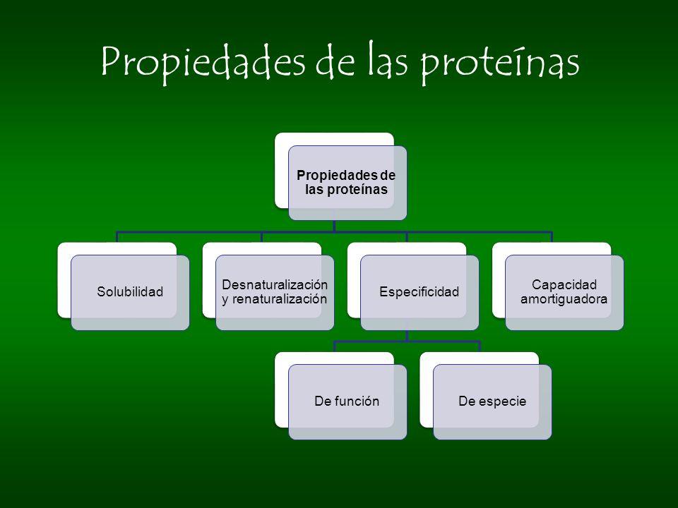 Propiedades de las proteínas Solubilidad Desnaturalización y renaturalización EspecificidadDe funciónDe especie Capacidad amortiguadora